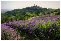 Ultraviolet (GP Camera) Tags: nikond80 nikonafsdx18105mmf3556gedvr countryside campagna view veduta landscape paesaggio hills colline fields campi lavender lavanda poppy papavero road strada village villaggio tower torre woods boschi trees alberi summer estate morning mattina light luce shadows ombre colors colori violet violetto green verde textures trame depthoffield profonditàdicampo shades sfumature silence silenzio quiet quiete calm calma wind vento vignetting whiteframe cornicebianca italy italia piemonte monferrato darktable gimp opensource freesoftware softwarelibero digitalprocessing elaborazionedigitale