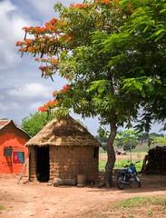 Village (Irene Becker) Tags: africa imagesofnigeria kaduna kadunastate nigeria nigerianimages nigerianphotos northnigeria westafrica flamboyant northernnigeria kasuwanmagani