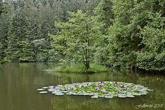 Le premier matin du monde. (Fallowsite) Tags: nikon d610 paysage vosges nénuphars étang paysdes 1000étangs