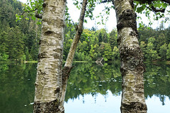 Lac de la Maix (East of France) (lotusblancphotography) Tags: france nature landscape paysage lac eau lake water reflection reflet trees arbres ngc