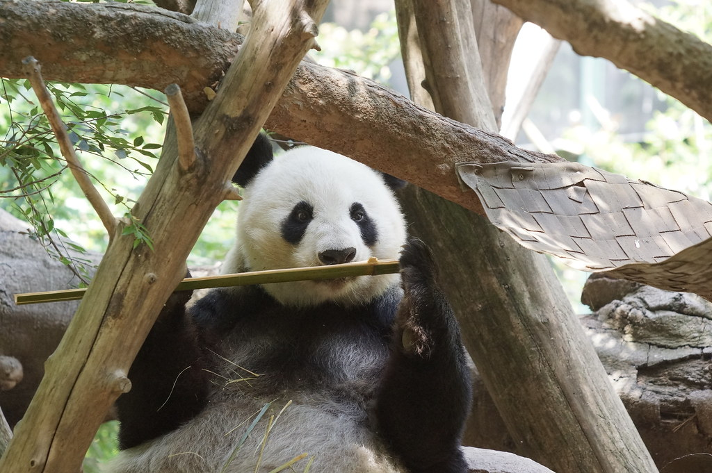 The World's Best Photos of baiyun and zoo - Flickr Hive Mind