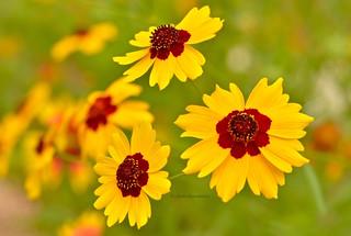 Yellow creations of beauty_DSC0080