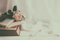 203/365: Just add water (judi may) Tags: 365the2018edition 3652018 day203365 22jul18 rose wilting petals lace books vintagestyle vintagebooks wood tabletopphotography stilllife canon5d 50mm soft softness matte faded