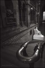 Charles Darwin (G. Postlethwaite esq.) Tags: charlesdarwin dof london naturalhistorymuseum sonya7mkii southkensington bokeh depthoffield fullframe mirrorless photoborder selectivefocus sepia stairs statue toned