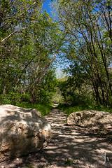 shaded path (vyhphotography) Tags: canoneos80d kansas cottonwoodfalls trees rocks path shade shadows sunlight