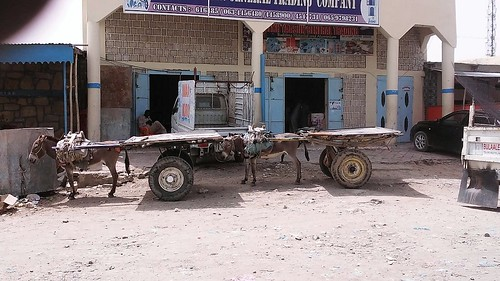 Donkeys in the streets of Borama