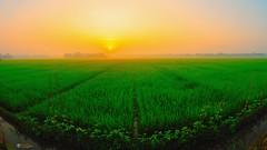 Good morning (rushdee3000) Tags: fisheye landscape ricefield nikon nikond200 sunrise