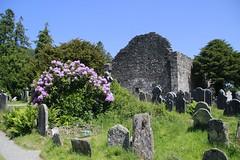 Cathedral (Paul McNamara) Tags: glendalough wicklow ireland monastery monastic site church cemetery flowers trees