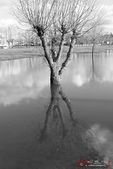 Primavera lluviosa (PeRRo_RoJo®) Tags: agua paisaje naturaleza reflejo a77ii sony parque inundación 77ii alpha bw disaster espejo ilca77m2 landscape mirror nature reflection slt sonya77ii water aqua ávila castillayleón españa es