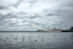 Swimming birds (rsvatox) Tags: saintpetersburg russia balticsea water birds sky boats atmosphere weather gulls clouds