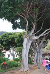 Ікод-де-лос-Вінос, Тенеріфе, Канарські острови  InterNetri  168