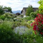 Rosen und Staudengarten