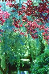 (Esmik D'Aguiar) Tags: green water spring mesuper pentax kodak sun leaves burgundy bokeh