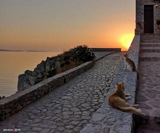 los gatos no ladran al amanecer - cats do not bark at dawn