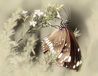 What the caterpillar calls the end of the world the master calls a butterfly. (Richard Bach)