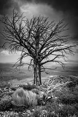 20180707 Big Bear-0008-HDR.jpg (Mark Harshbarger Photography) Tags: california trails deadtree offroad tree bigbear forestfire