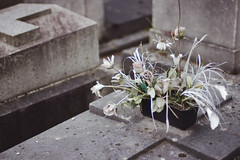 Paris No 66 (• CHRISTIAN •) Tags: paris france montparnasse cimetière cemetery graveyard mort death fleurs flowers fané wilted naturemorte plastique plastic pdc dof 50mm f14