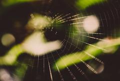 Lines & Bokeh.. (Emma Yeardley) Tags: spiderweb web lines bokeh abstract nature nikon nikond7500 macro 40mm green d7500 dof