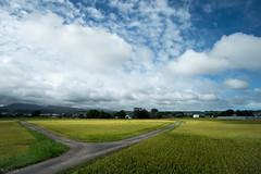 田 (fumi*23) Tags: ilce7rm3 sony 12mm samyang12mmf20ncscs samyang apsccrop field ricefield rice agriculture miyazaki landscape sky cloud road country countryside path japan 田 水田 雲 空 道 a7r3 宮崎