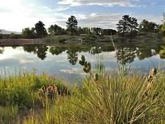Lakeside at dusk... (Jane Lazarz) Tags: janeelizabethlazarz walkingcolorado nikon p900 nikonp900 coloradosprings colorado janelazarz breathtakingcolorado blue mountains sky clouds lake trails hiking walking landscape reflectioninwater reflection grass trees explore inexplore explored