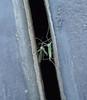 630 (yakfur) Tags: wv farm mercercounty morninghatch insect green westvirginia