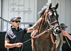 Robert Bruce (EASY GOER) Tags: horseracing equine thoroughbred sports belmontpark