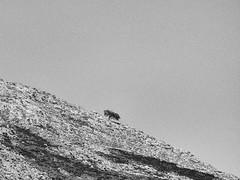 Lagos de Covadonga, Asturias (rgiw) Tags: spanienspain olympusomdem1 mzuiko1240mm blackwhite bw schwarzweiss sw monochrome stimmung bäume trees flower grass gras blume sky himmel wasser water wolken clouds see pond teich weiher spain nothernspain ribadesella lospicosdeeuropa blackandwhite