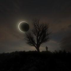 Fern Expirementing 2 B 2_00000 (RandomMan) Tags: eclipse greatamericaneclipse render 3d octane octanerender cinema 4d everyday tree landscape solar night sky sunset astronomy space nasa