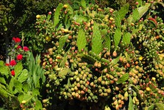 FlowersCactus (ONE/MILLION) Tags: flowers roses colors colorful buds blooms blossoms outdoors garden cactus lady bug williestark onemillion