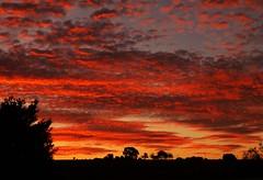 4am Sunday Sunrise..x (Lisa@Lethen) Tags: 4am sunrise sunday weather cloud sun silhouettes colour red orange yellow trees heatwaveuk