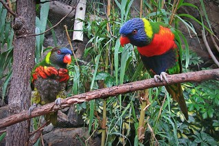 colorful birds :)