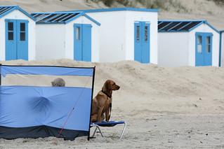 Baywatchdog