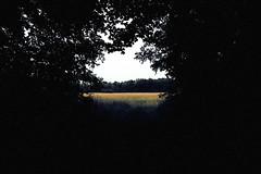 twenty (parfois) Tags: aprilwasteland parfois trees perspective shadows light lazy quiet peaceful arboretum morganarboretum field solitude melancholy pointofview filmgrain