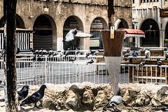 Souq Waqif Pigeons (www.iCandy.pw) Tags: souqwaqif pigeon qatar doha