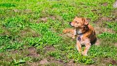 IMG_8788 (Desmojosh) Tags: canon eos m 50mm f18 new jersey mount laurel pets portrait