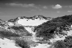 Zuydkote, France (bm^) Tags: dune nature zuidkote lenord frankrijk bw black white zwartwit boom tree nikon d700 nikond700 zeiss planar5014zf duin dunes duinen wolk cloud