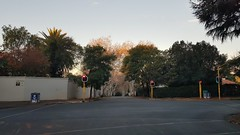 Tree Lined Streets (Rckr88) Tags: johannesburg south africa southafrica gauteng jhb treelinedstreets trees street streets road roads tree autumn leaves travel