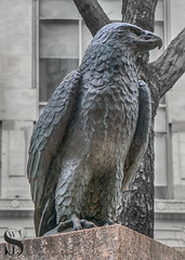 Statues Eagle (Singing With Light) Tags: 13th 2018 alpha6500 april bahbahra mirrorless nyc singingwithlight snow sonya6500spring statues sunny walkingthecity architecture colors manhattan photography singingwithlightphotography sony