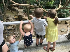 "Cousins at Brookfield Zoo • <a style=""font-size:0.8em;"" href=""http://www.flickr.com/photos/109120354@N07/28661393417/"" target=""_blank"">View on Flickr</a>"