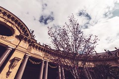 Petit Palais Courtyard in Bloom (awdylanis) Tags: petit palais courtyard bloom spring march 2018 petitpalais column columns architecture clouds chilly cour beaux arts style beauxartsstyle beauxarts pink vosges granite giltbronze lepetitpalais paris france travel traveler europe canon canonphotographer