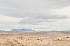 Passing Views 2 (pni) Tags: cloud view landscape horse mountain hill field fell road37 frombuswindow is18 iceland ísland pekkanikrus skrubu pni animal