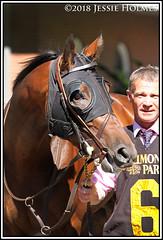 Mendelssohn (Spruceton Spook) Tags: horseracing horses belmontpark dwyer mendelssohn