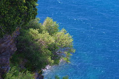 564 - Cap Corse - Nonza, sur la falaise (paspog) Tags: nonza corse corsica caocorse mai may 2018 france falaise mer cliff sea see