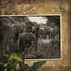 éléphant d'Afrique (WayneToTheMax) Tags: elephant africa afrique safari herd baby bush chameleon nikon d750 vintage leaf passport travel