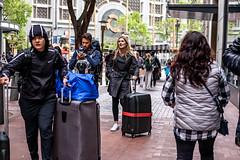 San Francisco 2018 (burnt dirt) Tags: sanfrancisco california vacation town city street road sidewalk crossing streetcar cablecar tree building store restaurant people person girl woman man couple group lovers friends family holdinghands candid documentary streetphotography turnaround portrait fujifilm xt1 color laugh smile young old asian latina white european europe korean chinese thai dress skirt denim shorts boots heels leather tights leggings yogapants shorthair longhair cellphone glasses sunglasses blonde brunette redhead tattoo pretty beautiful selfie fashion japanese luggage suitcase bag silver