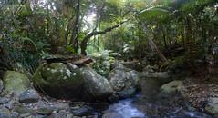 Daintree Creek (madfuzz1982) Tags: wideangle stitch autostitch panorama landscape australia queensland daintreeresearchcentre nikon1aw1