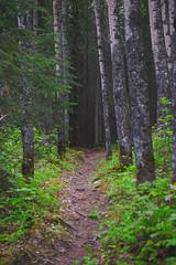 Anglų lietuvių žodynas. Žodis untrodden reiškia a nepramintas, ne(iš)vaikščiotas; nevaikščiojamas; apleistas lietuviškai.