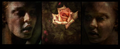 Cathy - Roses and Redhaeds (andredekok) Tags: rose redhead girls textures triptych