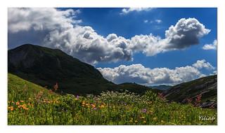 Une explosion florale au Cormet de Roselend
