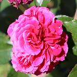 Maig_0162 thumbnail